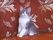 Подарю котят