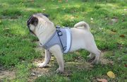 шлейка-жилетка для мелких пород собак
